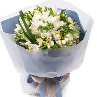 [플라워포유] 후리지아화이트 (RM_RBC8028) [꽃다발/결혼기념일/크리스마스/프로포즈/화이트데이/발렌타인데이]