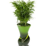 [플라워포유] 마블아레카야자 (RM_RHS1058) [공기정화식물/관엽식물/개업화분/이사선물]