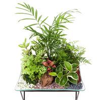 [플라워포유] 모듬수반 (RM_RHS2041) [공기정화식물/관엽식물/화분배달/개업화분추천/창업선물/개업선물/이사선물/이사화분/생일선물/화분/축하화분]