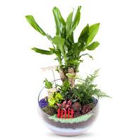 [플라워포유] 황금죽 (RM_RHS2043) [공기정화식물/관엽식물/화분배달/개업화분추천/창업선물/개업선물/이사선물/이사화분]